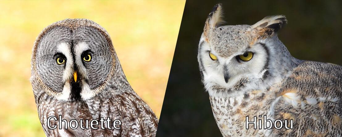 Diff rence entre une chouette et un hibou - Difference entre encastrable et integrable ...